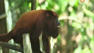 Selva Peru - Documental Amazonas - Parte 1 [Full HD 1080p]